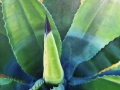 "Century Plant     Oil on Canvas, 24"" x 30"""
