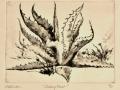 """Century Plant - dry point etching, 8"""" x 10"""""""
